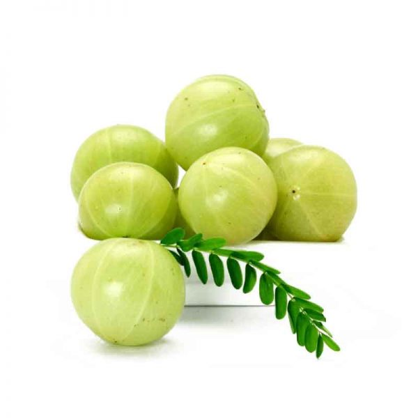 Amla-(-Big-Fruit,-Grown-through-seeds-)—Plant-3