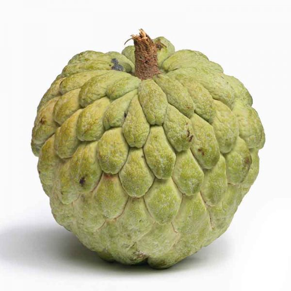 Annona-Squamosa,-Sita-Phal-(-Grown-through-seeds-)—Plant-2