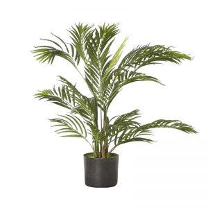 Buy Indoor Plants Online - Buy Plants Online | Lilplants