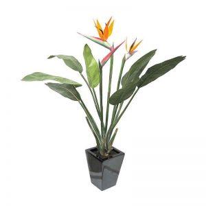Bird-of-Paradise Plant-3