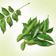 Curry-Leaves-2