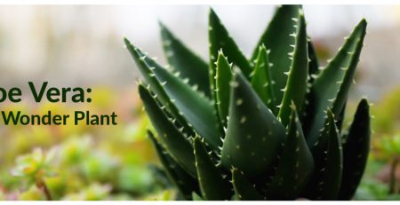 Aloe Vera: The Wonder Plant - Lilplants