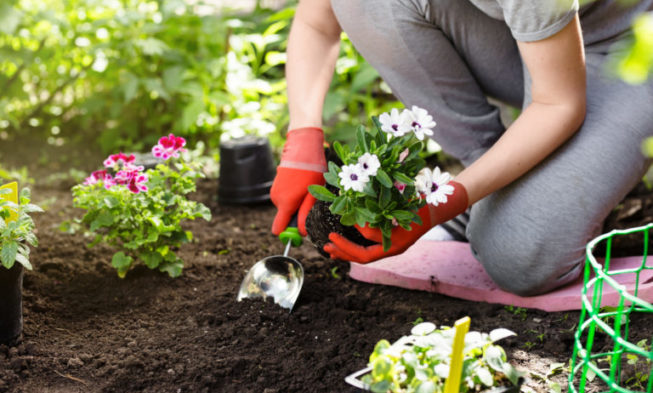 Planting flowers in the garden -